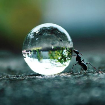 cropped-ant-pushing-a-water-droplet1.jpg