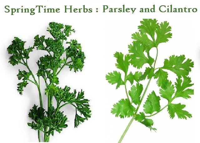 healthbenefits-of-parsley-and-cilantro